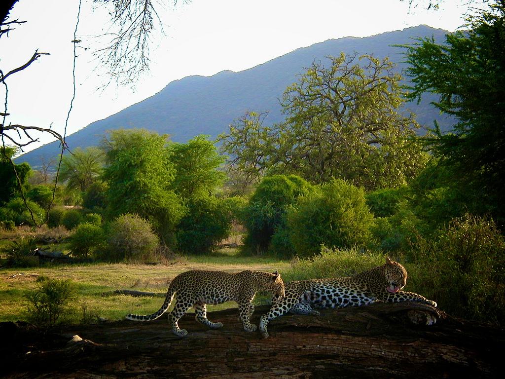 Voyager en Afrique avec safarivo